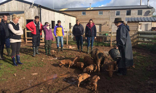 Meeting the pigs on smallholding course 011016 small