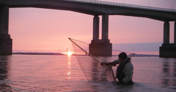 fishermen with salmon by Severn bridge